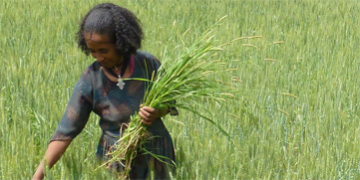 Ethiopia farmer