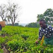 Uganda farmers