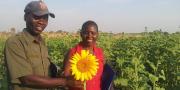 Tanzania sunflower
